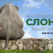 как справляться со слоном